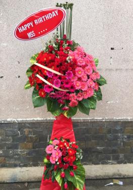 Hồng song phát - D25050 - xinhtuoi.online
