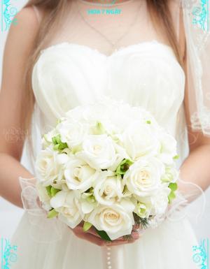 Tinh Tuyền - D24943 - xinhtuoi.online