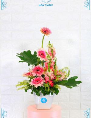 Sắc hồng yêu thương - D25581 - xinhtuoi.online