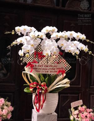 Hồ Điệp Khai Trương - D26127 - xinhtuoi.online