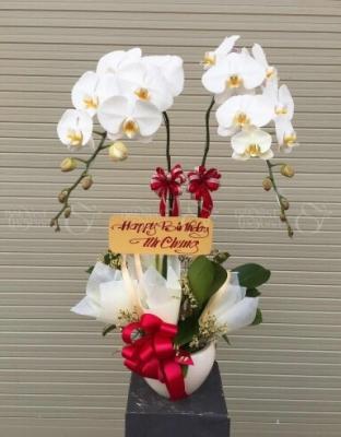 Chậu Hoa Khai Trương - xinhtuoi.online