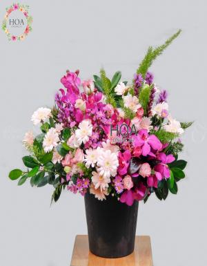 Chậu Hoa Chúc Mừng - D140939 - xinhtuoi.online
