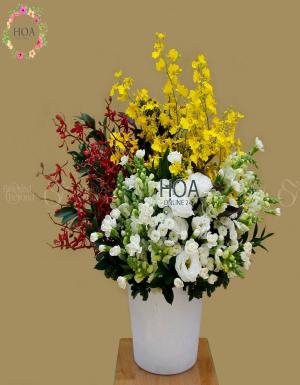 Chậu Hoa Chúc Mừng - D140907 - xinhtuoi.online