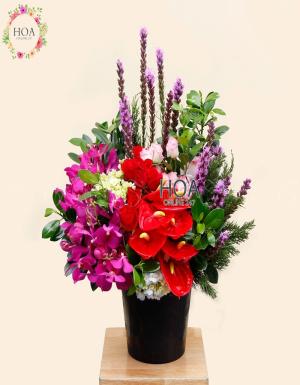Chậu Hoa Chúc Mừng - D178659 - xinhtuoi.online