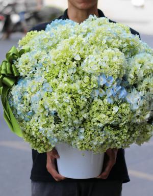 Flower Pot Birthday Flower - D177087 - xinhtuoi.online