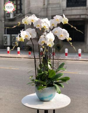Bình Lan Hồ điệp - D144468 - xinhtuoi.online