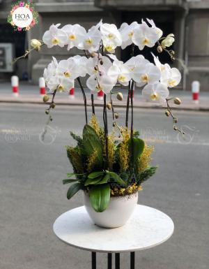 Bình Lan Hồ điệp - D144469 - xinhtuoi.online