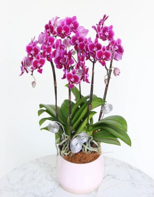 Vase Orchid - xinhtuoi.online