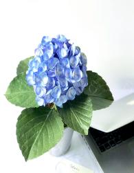 Chậu Hoa Chúc Mừng - xinhtuoi.online