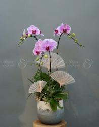 Chậu Hoa Quà Tặng - xinhtuoi.online