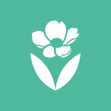 Xinh Tươi Online