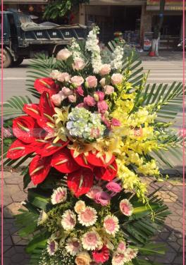 Vinh hoa - D71634 - xinhtuoi.online