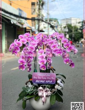 Khai xuân - D30176 - xinhtuoi.online