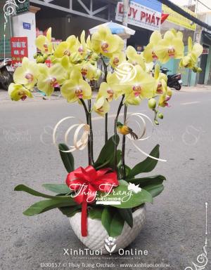 Xuân như ý - D30157 - xinhtuoi.online