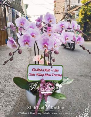 Lộc phát - D30166 - xinhtuoi.online