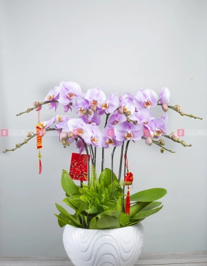Phát tài phát lộc - D59995 - xinhtuoi.online