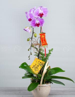 An khang thịnh vượng - D63892 - xinhtuoi.online