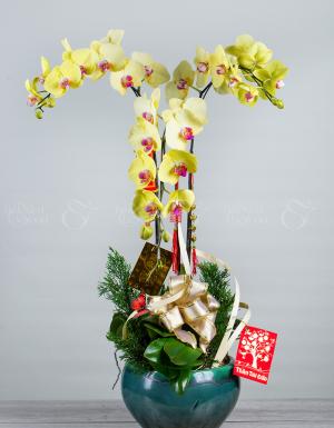 An khang thịnh vượng - D63893 - xinhtuoi.online
