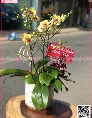 Phát lộc - D63956 - xinhtuoi.online