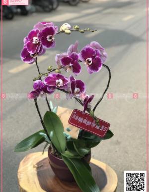 Phú ý - D63957 - xinhtuoi.online