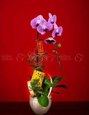 An Khang Thịnh Vượng - D63960 - xinhtuoi.online