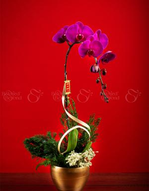 Tết Sum Vầy - D63961 - xinhtuoi.online