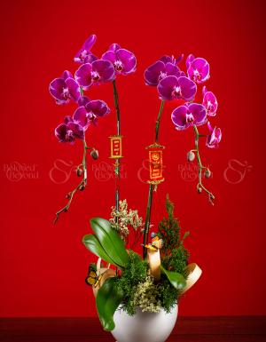 Phúc Như Đông Hải - D63964 - xinhtuoi.online