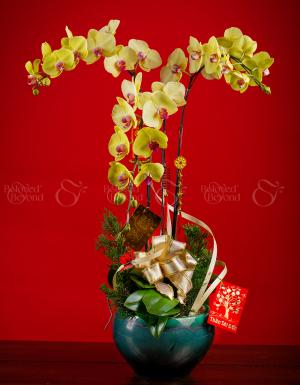 An khang thịnh vượng - D63967 - xinhtuoi.online