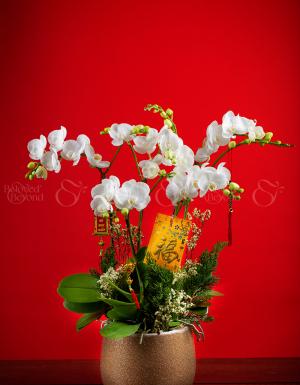 An khang thịnh vượng - D63973 - xinhtuoi.online