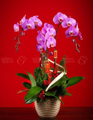 An Khang Thịnh Vượng - D63969 - xinhtuoi.online