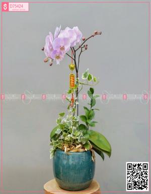 Lan Hồ Điệp 1578 - D75424 - xinhtuoi.online