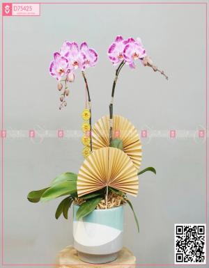 Lan Hồ Điệp 1577 - D75425 - xinhtuoi.online