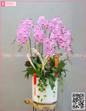 Lan Hồ Điệp 1573 - D75429 - xinhtuoi.online
