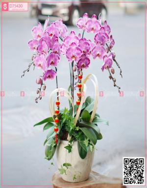 Lan Hồ Điệp 1572 - D75430 - xinhtuoi.online
