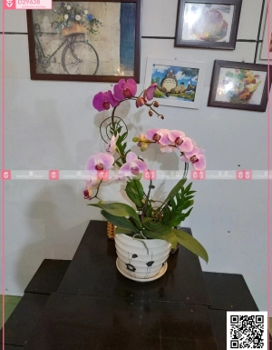 Khai xuân - D29638 - xinhtuoi.online