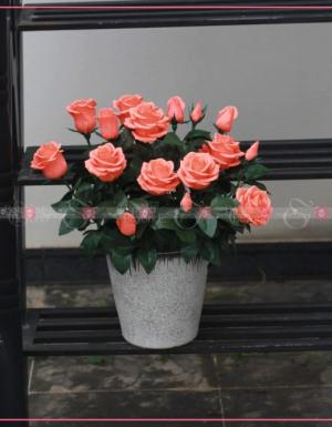 Dịu dàng - D29659 - xinhtuoi.online