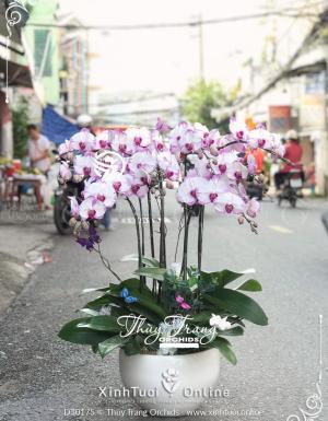 Phú quí - D30175 - xinhtuoi.online