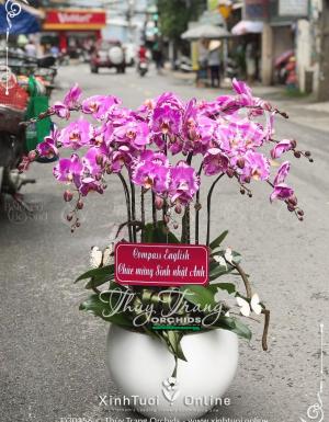 Xuân về - D30156 - xinhtuoi.online