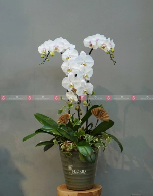 Dịu dàng - D37267 - xinhtuoi.online