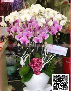 Xuân về - D37647 - xinhtuoi.online