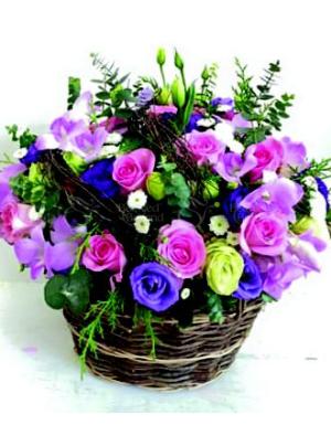 Vườn hoa nhà nàng - D45206 - xinhtuoi.online