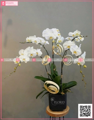 mã sp 0222 - D56205 - xinhtuoi.online
