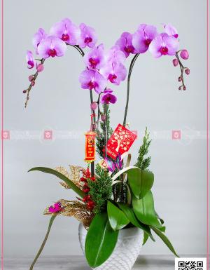 An khang thịnh vượng - D63899 - xinhtuoi.online