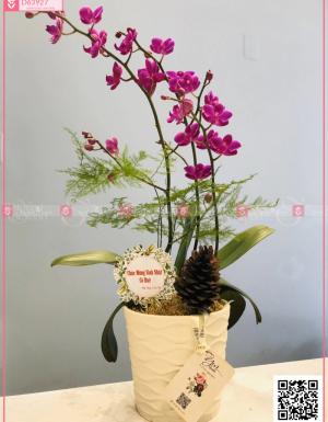 Xuân như ý - D63927 - xinhtuoi.online