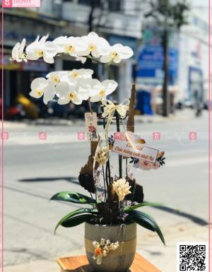 An khang - D63931 - xinhtuoi.online