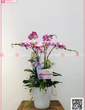 Đại lộc - D63939 - xinhtuoi.online