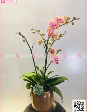 An khang - D63950 - xinhtuoi.online