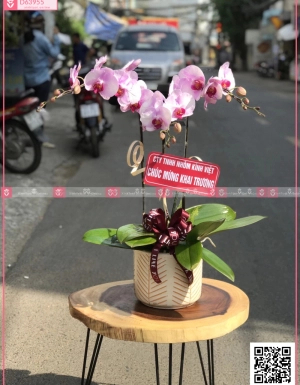 Tài lộc - D63955 - xinhtuoi.online