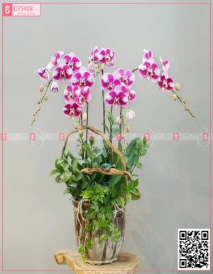 Lan Hồ Điệp 1574 - D75428 - xinhtuoi.online