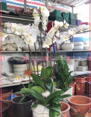 Tài lộc - D75496 - xinhtuoi.online